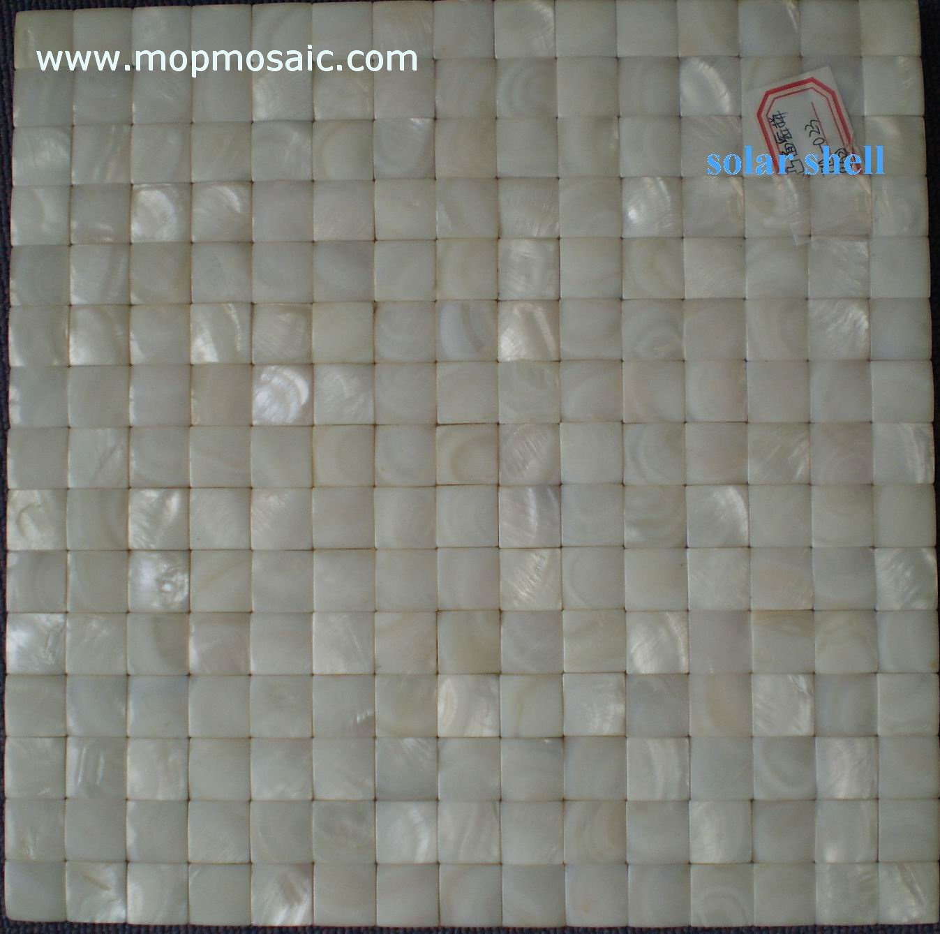 Pure white shell mosaic(convex)