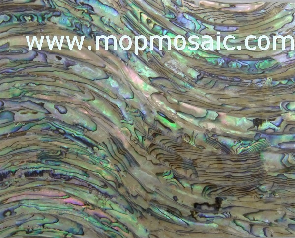 New Zealand abalone shell veneer